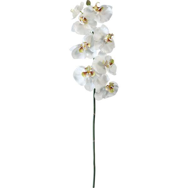 orchid e blanche 1 tige 60cm. Black Bedroom Furniture Sets. Home Design Ideas